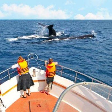 Mirissa Whale Watching1