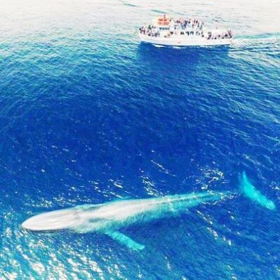 Mirissa Whale Watching2