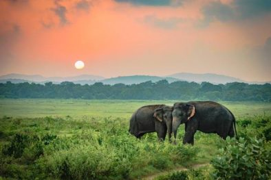 Private Day Tour in Udawalawe National Park Feature