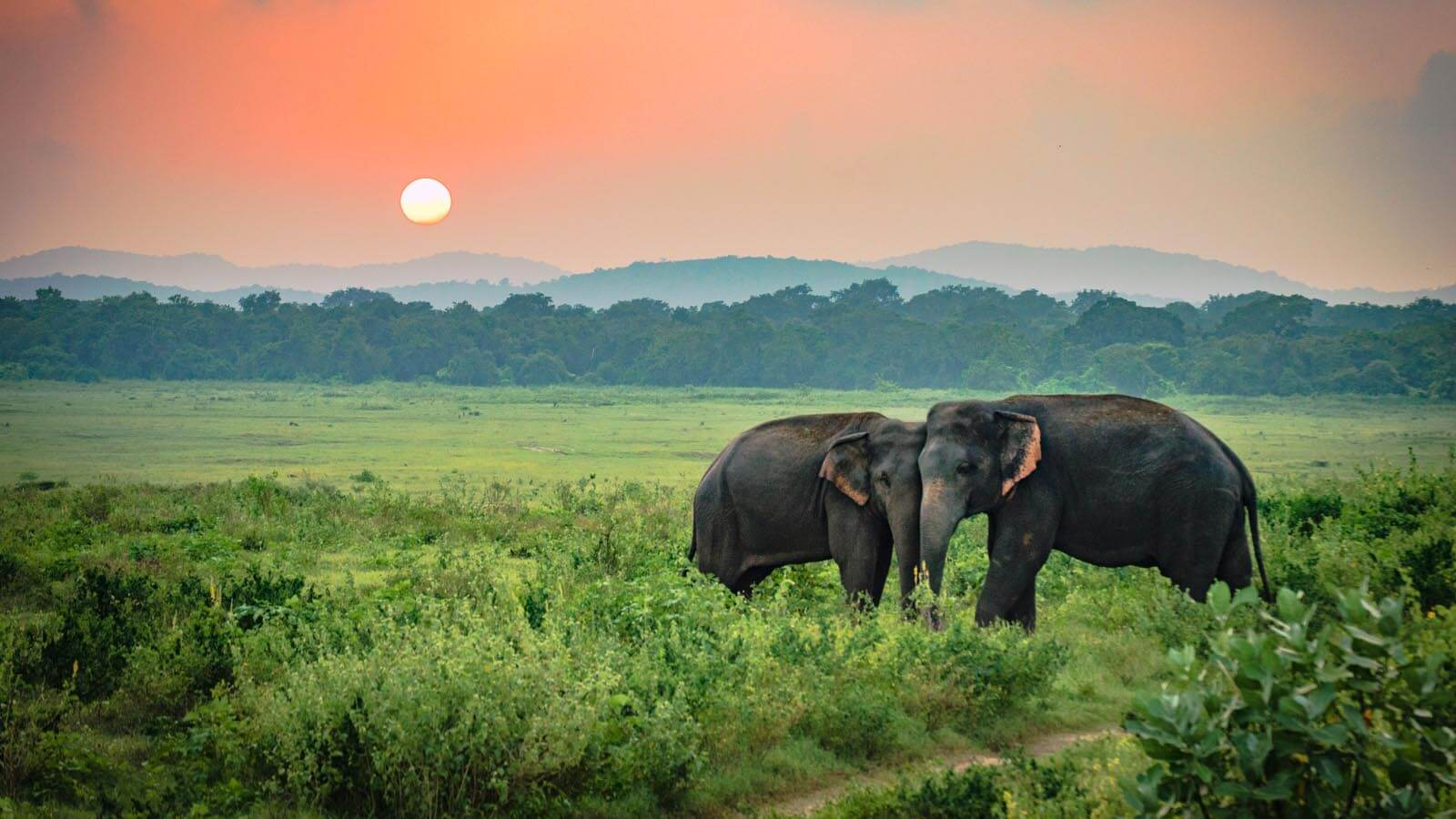 Private Day Tour in Udawalawe National Park