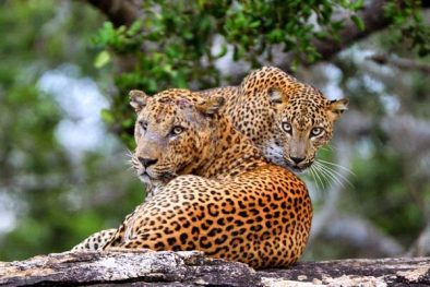 Private Day Tour in Yala National Park Feature