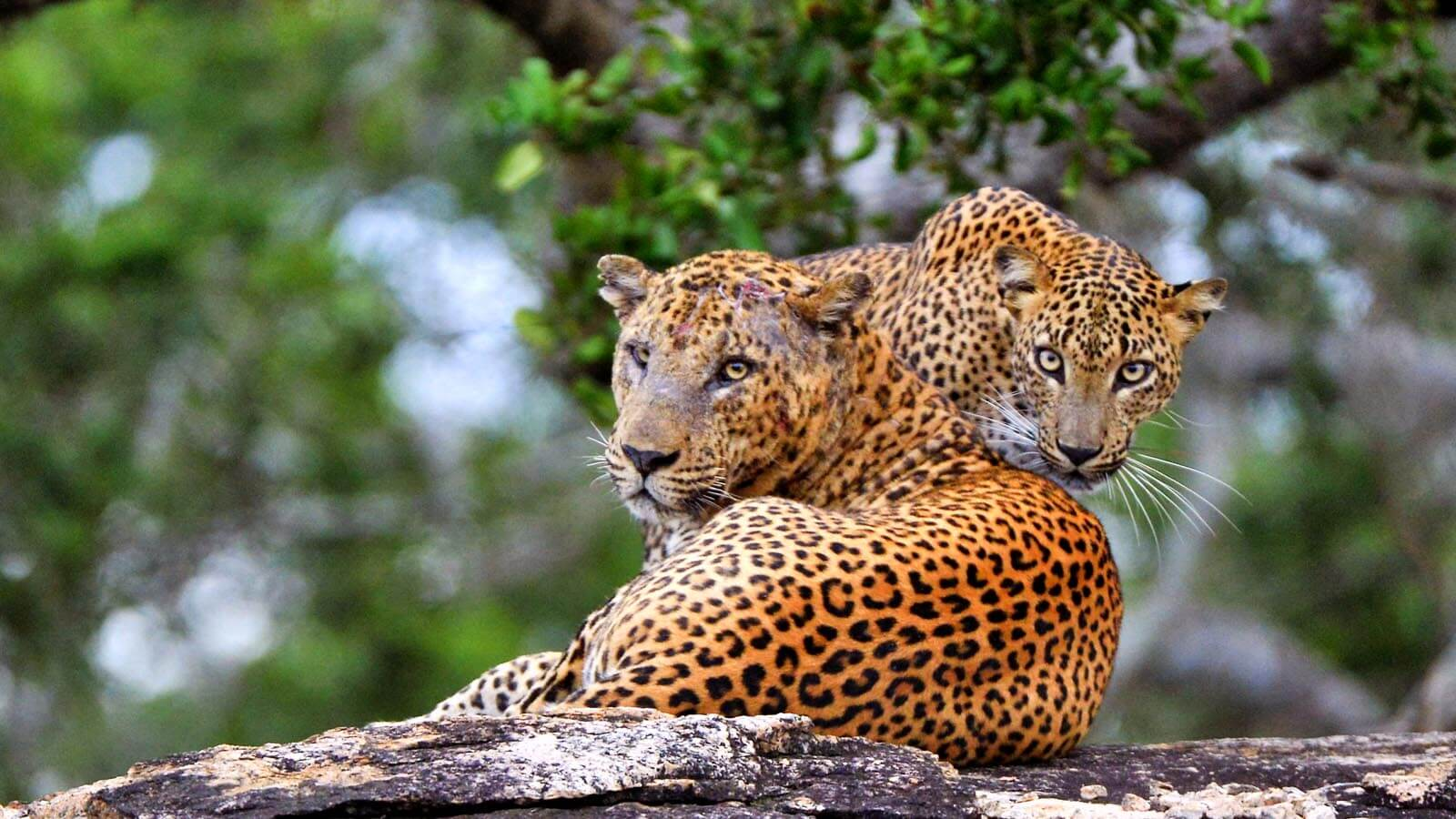 Private Day Tour in Yala National Park