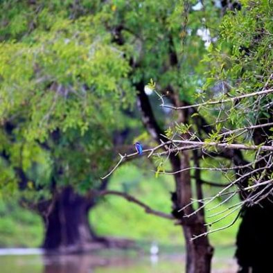Sigiriya Sanctuary