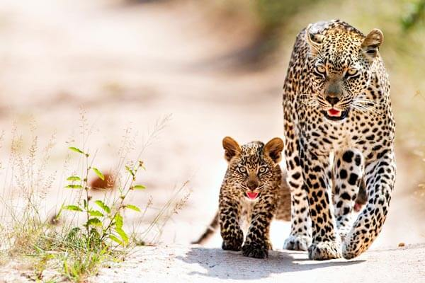 Wildlife Tour in Sri Lanka feature
