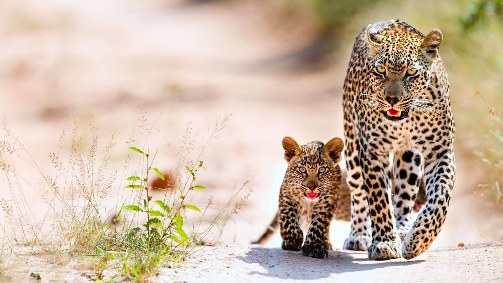 Wildlife Tour in Sri Lanka