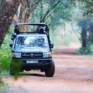 Wilpattu Jeep Safari