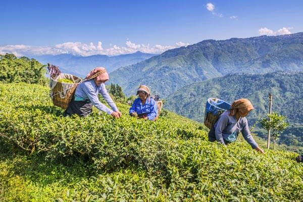 Hill Country Tour in Sri Lanka