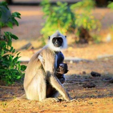 Monkey at Yale