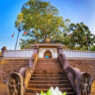 Siri Maha Bodhi Tree