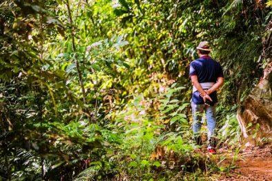 Private Day Tour in Sinharaja Jungle Safari feature
