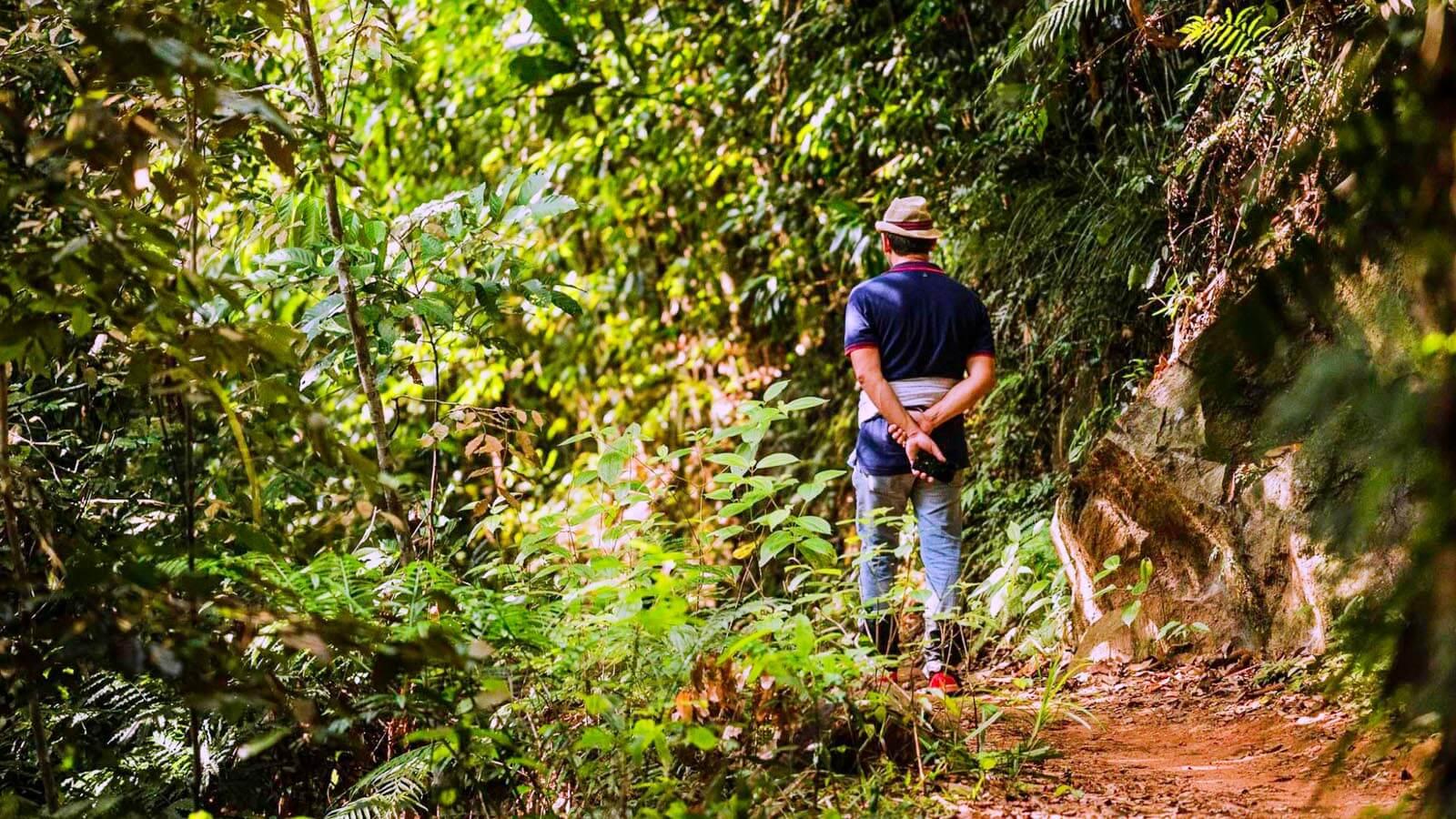 Private Day Tour in Sinharaja Jungle Safari
