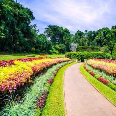 Royal Botanical Gardens Peradeniya